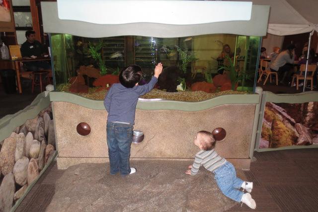 Rerun shows Thumper the aquarium