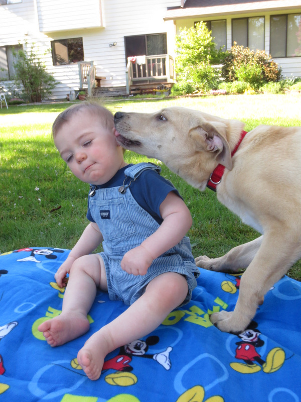 Dog Keeps Getting Urinary Tract Infections