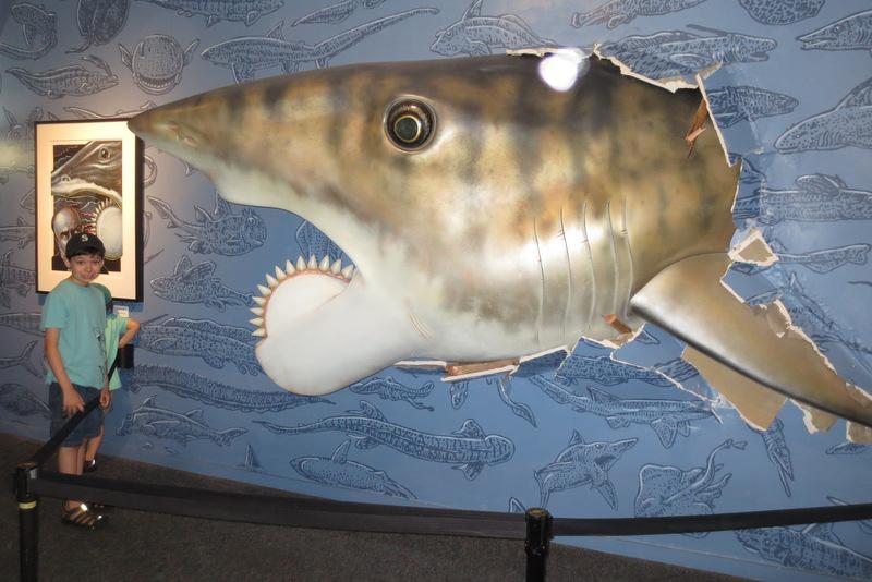 Prehistoric Shark Megalodon Skeleton | www.pixshark.com - Images Galleries With A Bite!