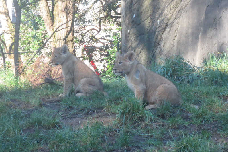 Two of the cubs