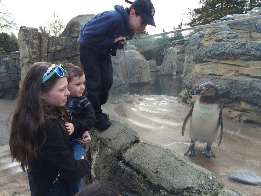 The kids try to talk to the penguin
