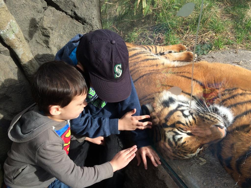 """""""Pet"""" the tiger"""