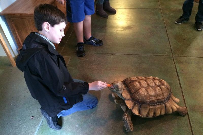 Tad feeds the tortoise