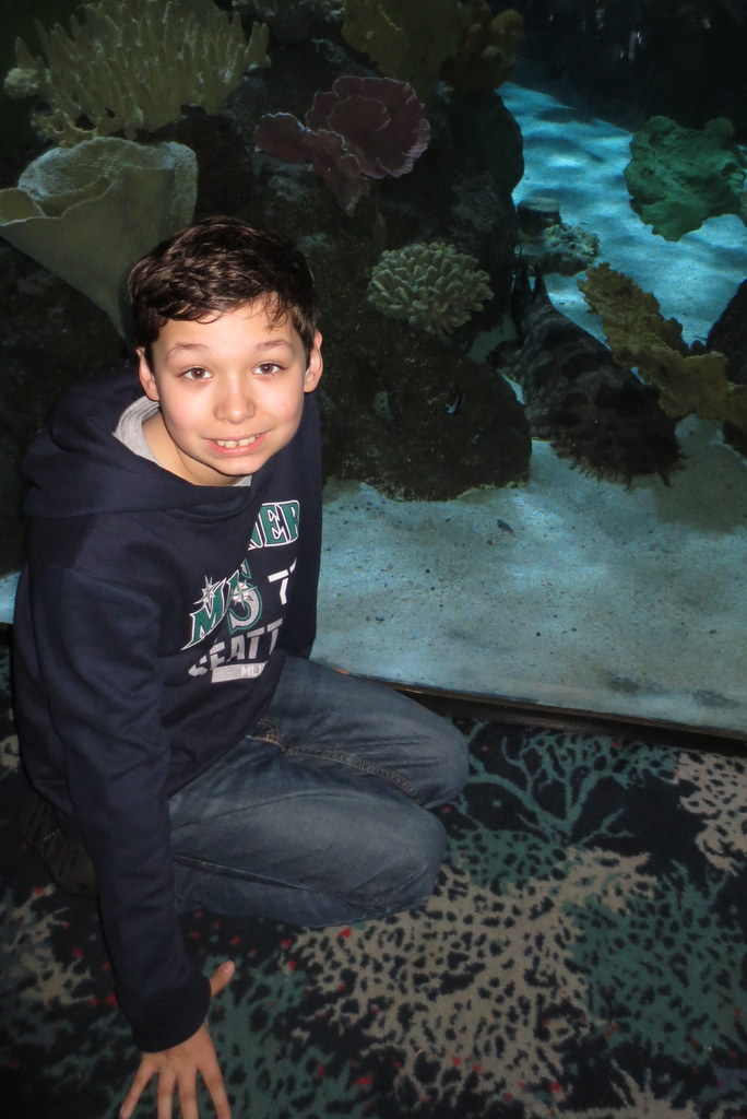 Tad and his friend the wobbegong shark