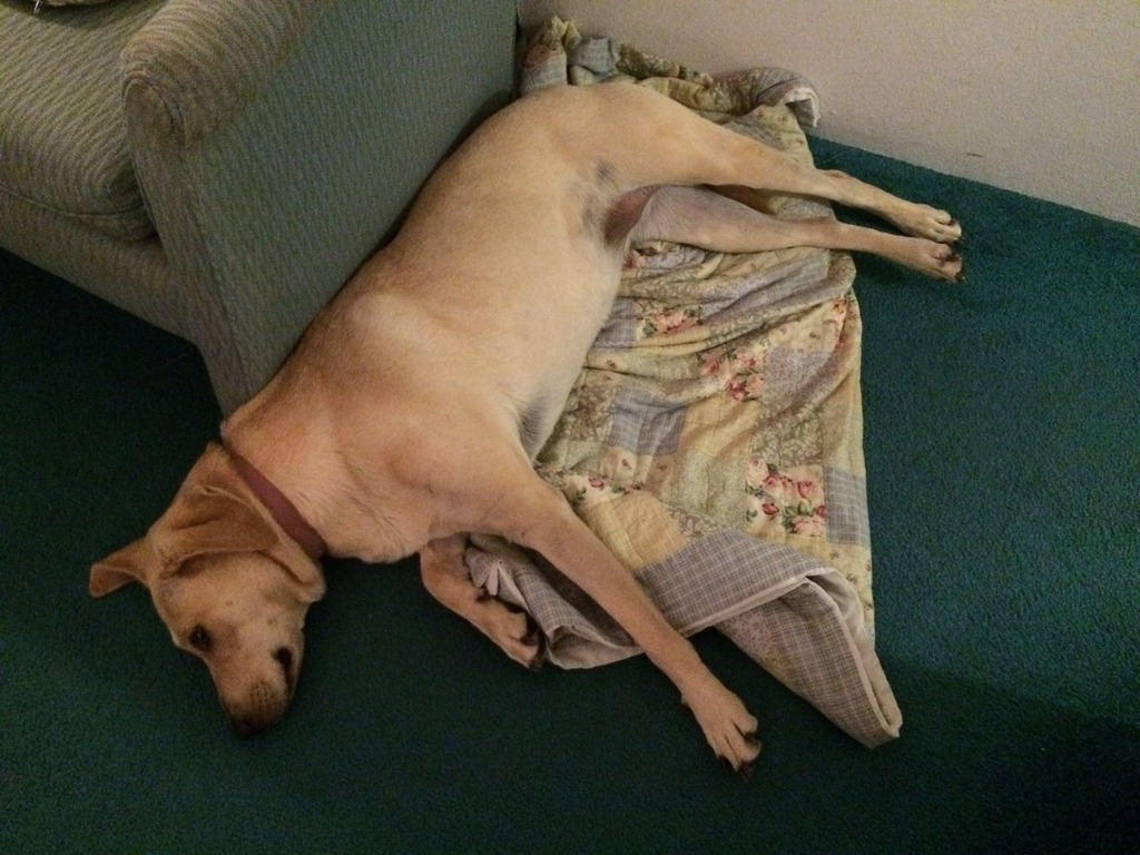 Big Talli dog