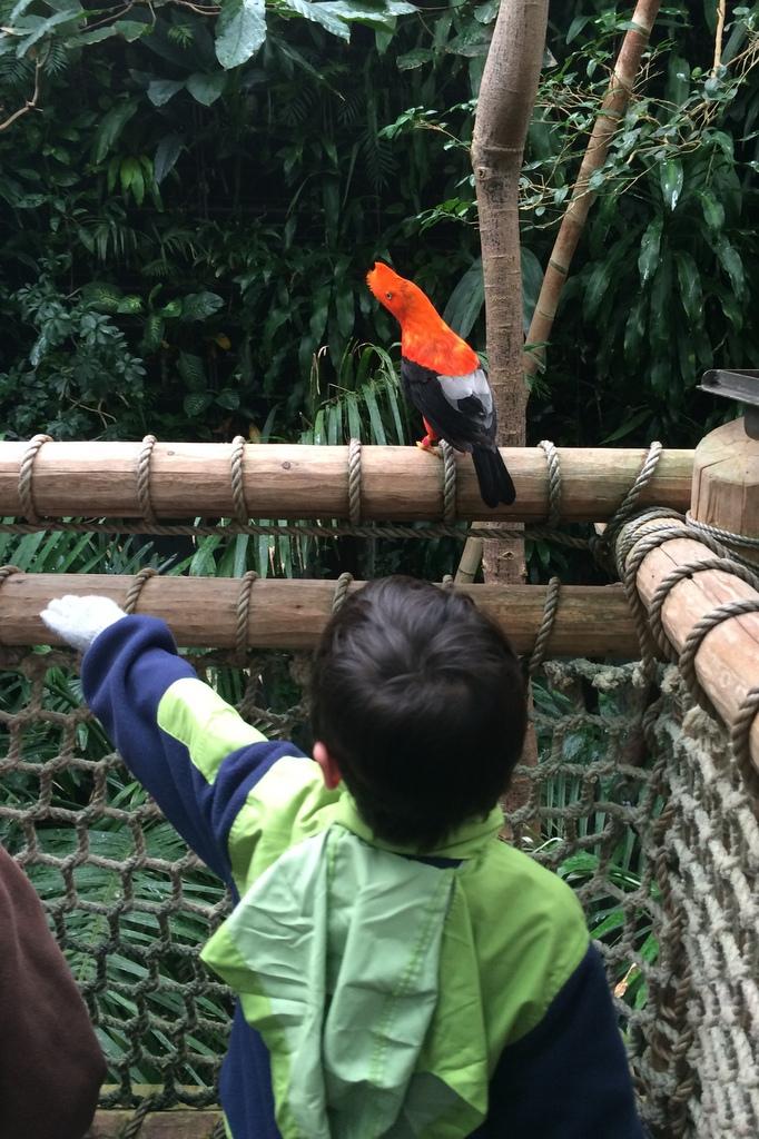 Rerun offers a bird a perch